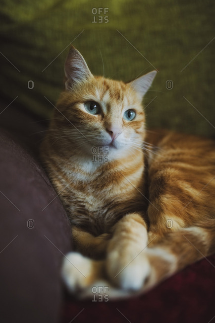 Ginger cat lying on couch