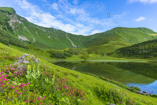 Germany- Bavaria- Allgaeu- view to Schlappolt Lake with  Alpine roses in the foreground