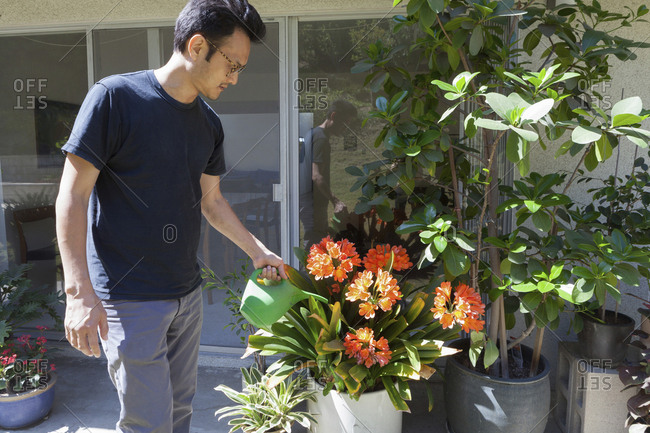 Mature man watering flower plant in backyard on sunny day