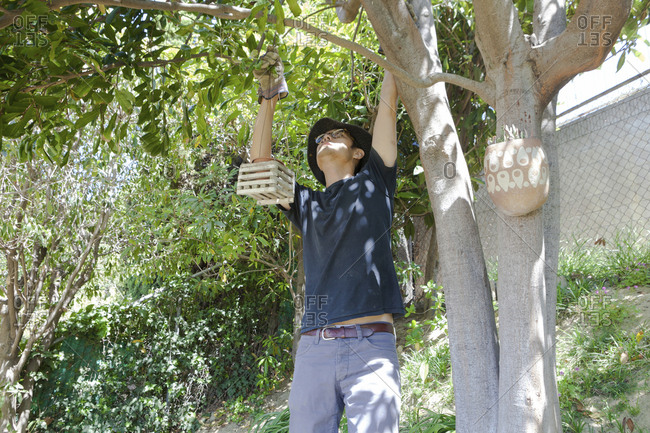 Mature man hanging planter on tree branch in backyard