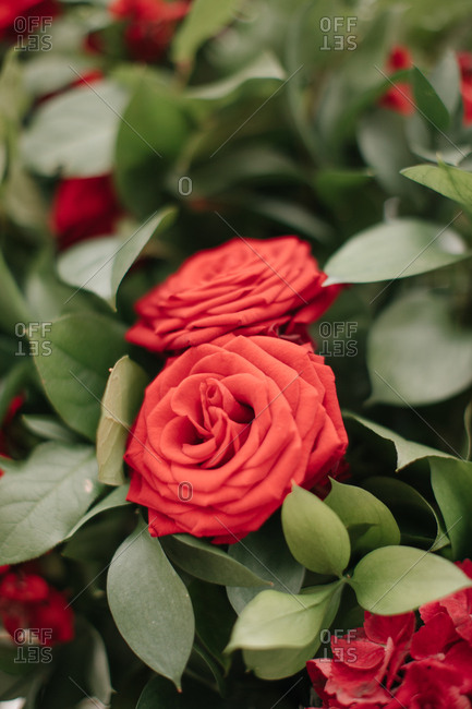 Close up of red roses  at a wedding ceremony