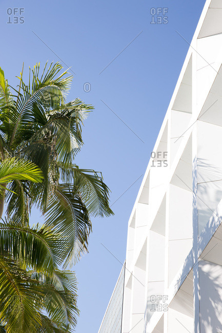 Low angle view of modern building and palm trees
