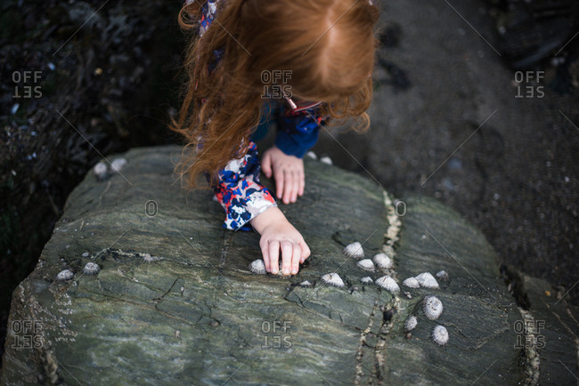Girl organizing shells on a large rock