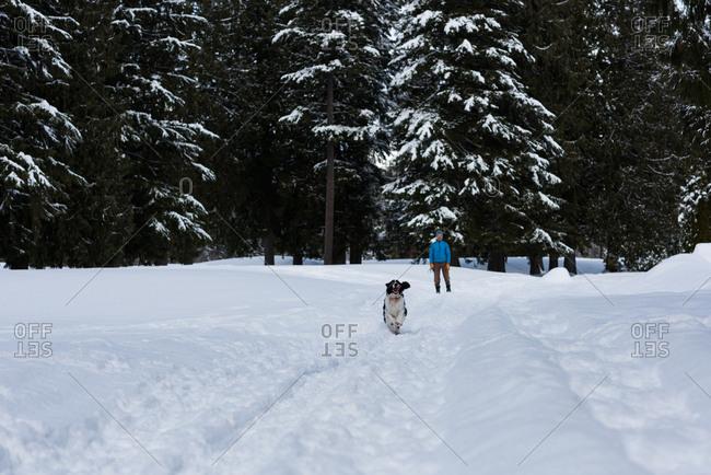 Dog running on snow landscape during winter