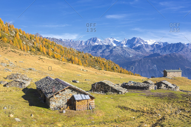 Stone huts and colorful woods in autumn with Bernina Group on background, Alpe Arcoglio Valmalenco, Valtellina, Lombardy, Italy, Europe