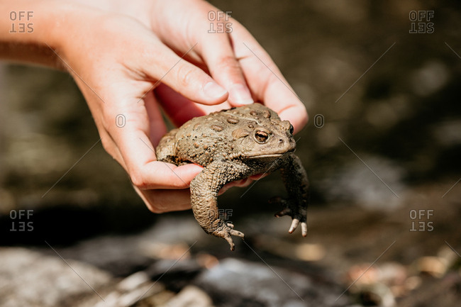 Person holding a toad - Offset