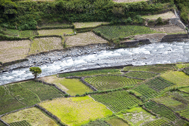 Fields in Banaue, Ifugao Province, Philippines