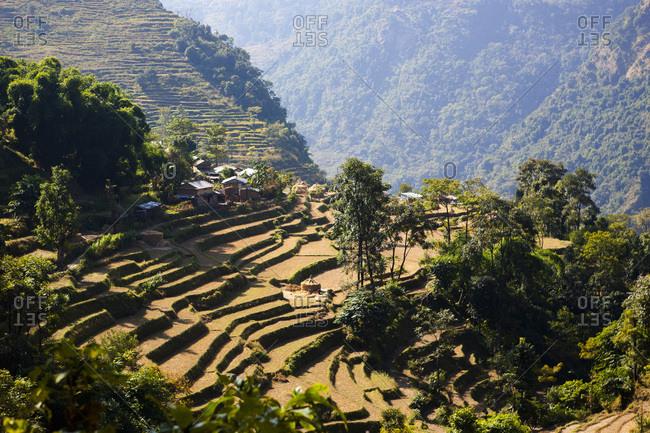Terraced cultivation in a hamlet near Bhulbhule in Nepal
