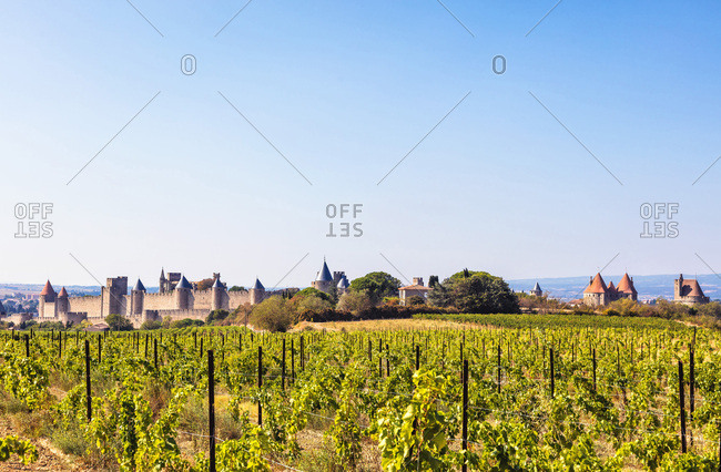 Vineyard and medieval city of Carcassonne, Languedoc-Roussillon, Aude, Occitanie, France