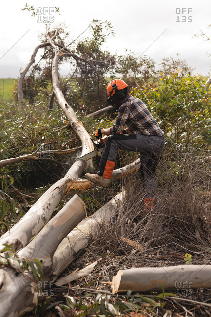 Side view of lumberjack with chainsaw cutting tree trunk
