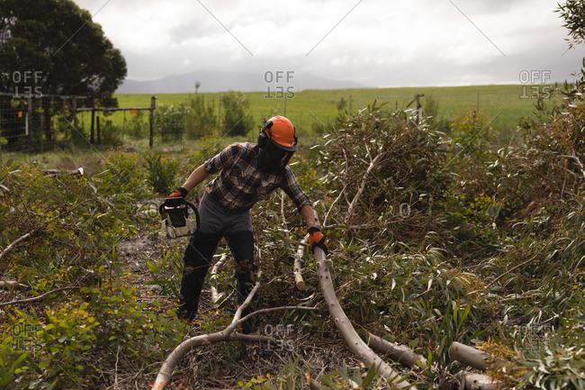 Lumberjack cutting dead tree in forest