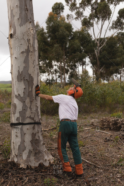 Rear view of lumberjack cutting tree in the forest
