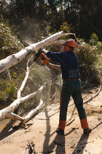 Lumberjack cutting fallen tree in the forest at countryside