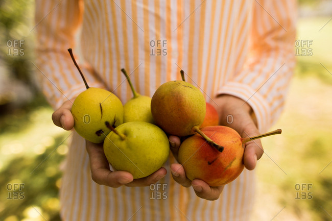 Woman holding fresh picked pears