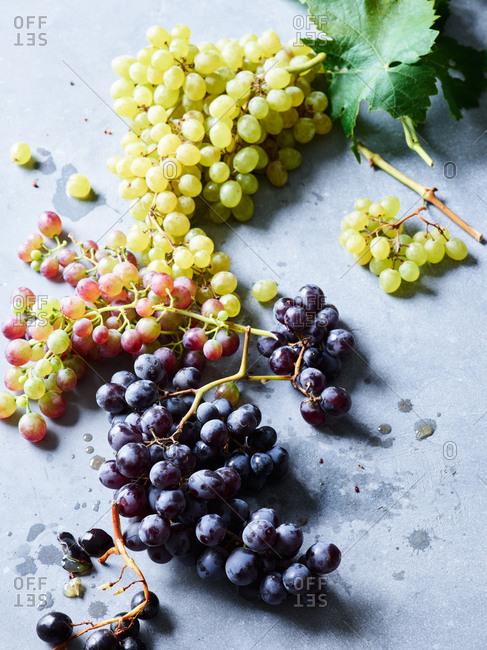 Sonoma grape varieties