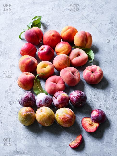 Sonoma stone fruit varieties