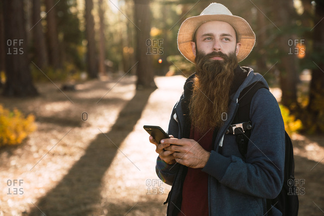 Adult man with gorgeous beard standing with backpack in sunny woods using phone and looking away, USA