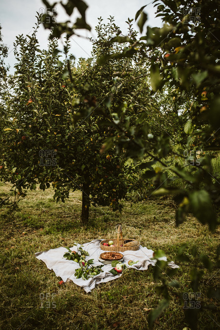 Apple galette in an orchard