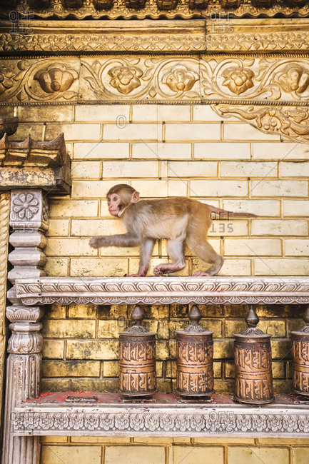 Monkey at Swayambhunath temple in Nepal