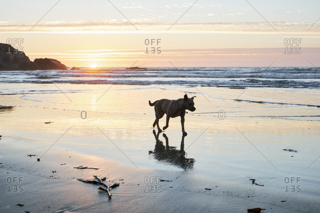 Silhouette of dog on beach at sunset