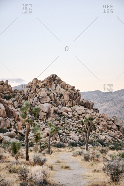 Joshua Tree National Park at sunrise, California