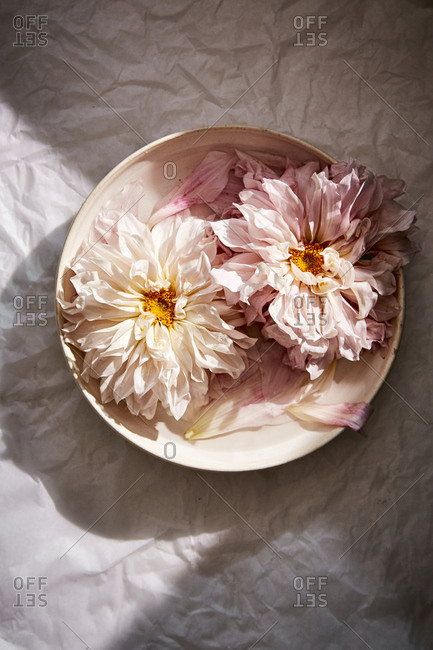 Peonies in a bowl