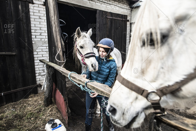 March 11, 2018: View of single woman with two white horses at stable, Bogatki, Mazowieckie Province, Poland