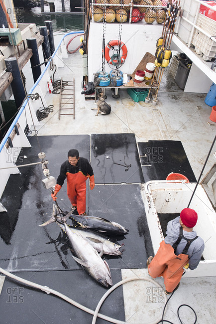 April 24, 2018: Deckhands offloading tuna from a commercial fishing boat in San Diego, California, USA