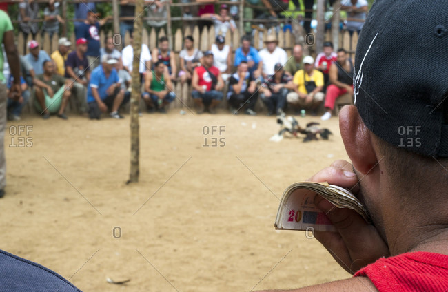 May 16, 2015: Man holding money while gambling at cock fight in Vinales, Pinar del Rio Province, Cuba