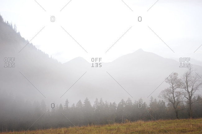 Foggy mountain landscape with maple trees