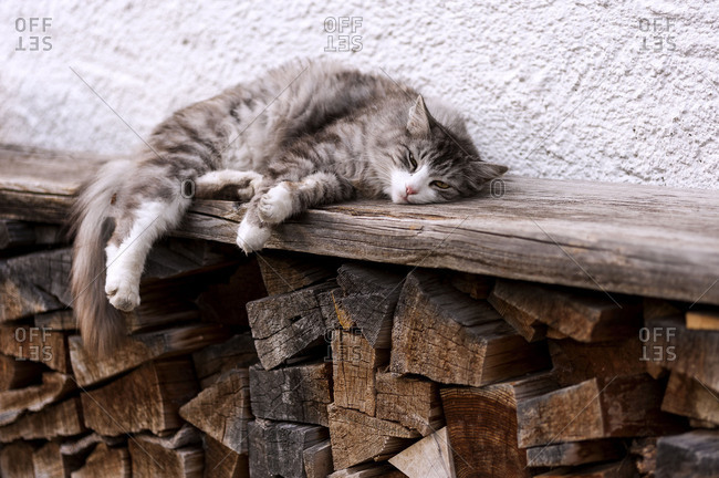 Cat lies on a fireside bench with firewood and looks to the camera.