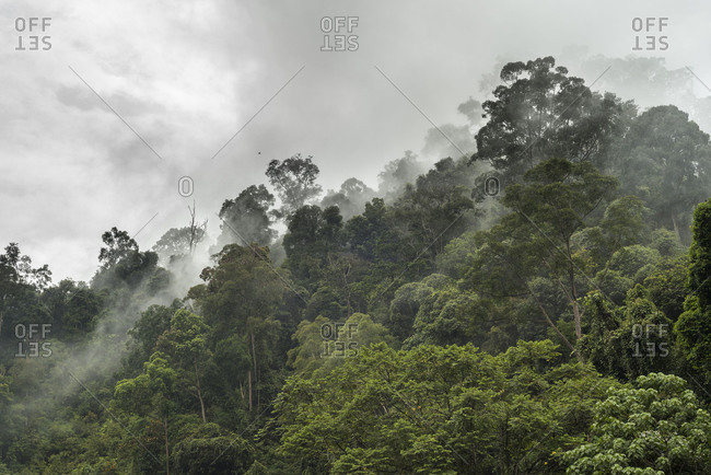 Nebulous mood in the mountainous jungle of the Gunung Leuser National park on the Indonesian island Sumatra.