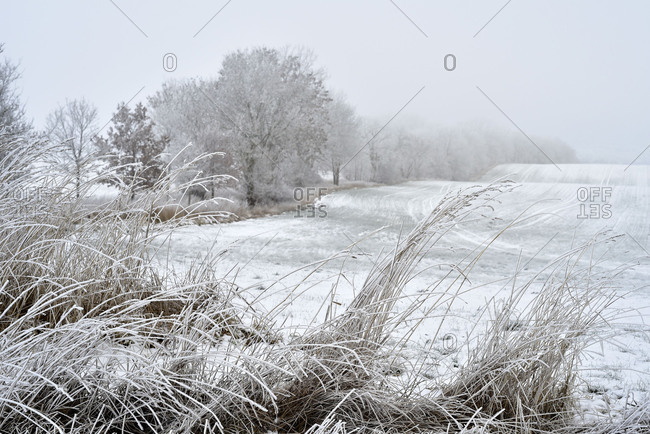 With hoarfrost covered field, in the foreground long grass and in the left of the picture iced up trees in a way.