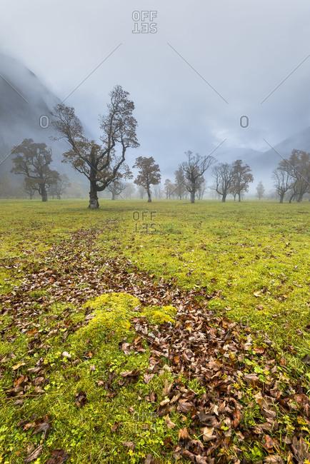 Storm in the autumnal Ahornboden in the Karwendelgebirge (mountains).