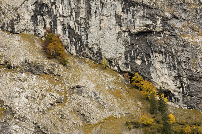 Autumnal trees in the steep mountainside.