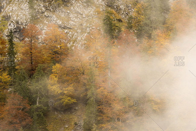 Fog racks along a rock face with autumnal trees