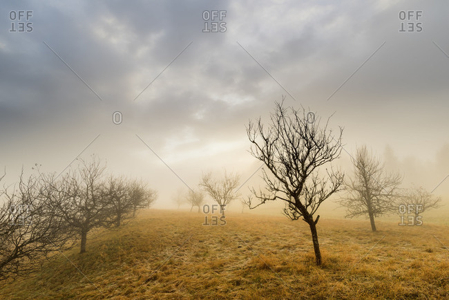 alpine orchard meadow with autumn mood