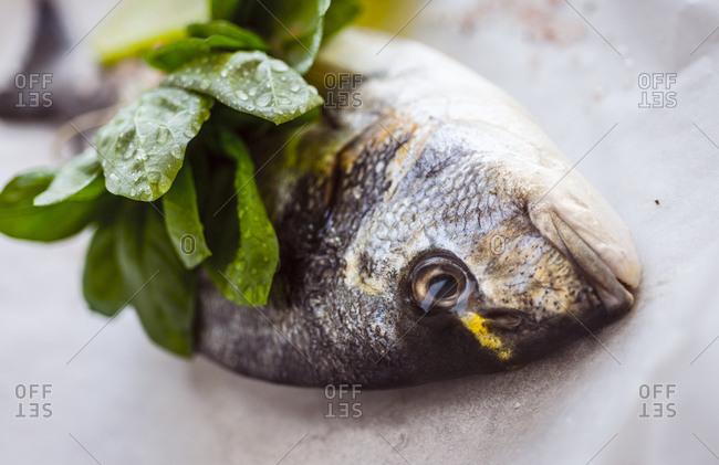 Sea bream with fresh herbs