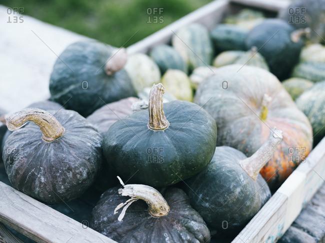 Green pumpkins in wooden box