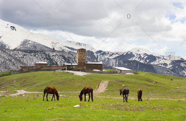 Georgia- Ushguli- Horses grazing in front of Lamaria Church