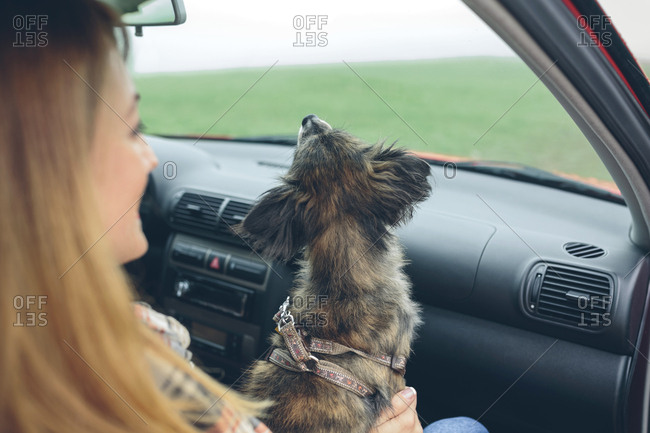Small dog sitting on woman's lap in car