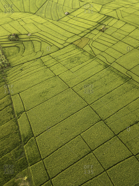 Indonesia- Bali- Aerial view of rice fields