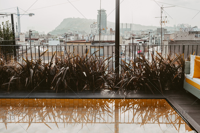 reflections of plants in a rooftop pool