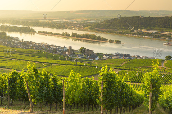 Vineyards and River Rhine, Rudesheim, Rhineland-Palatinate, Germany