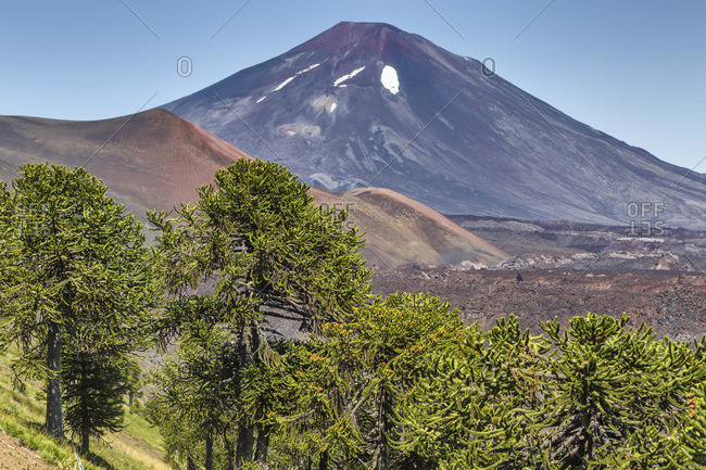 Lonquimay volcano, Reserva Nacional Malalcahuello-Nalcas, Araucania region, Chile