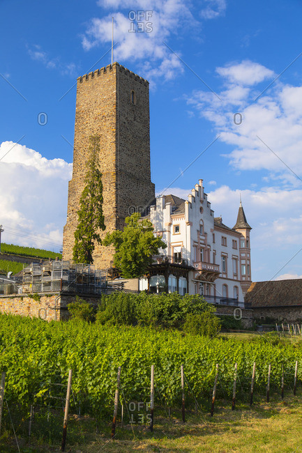 Vineyard and Boosemburg Castle, Rudesheim, Rhineland-Palatinate, Germany