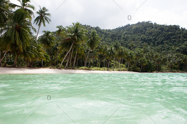 Tropical beach lined with palm trees