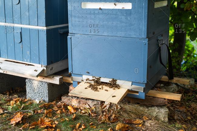Honeybees entering beehive