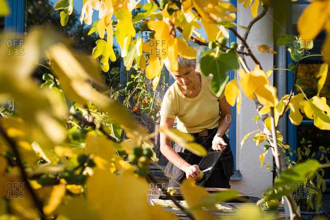 View through autumn leaves of woman slicing fruit on mandoline