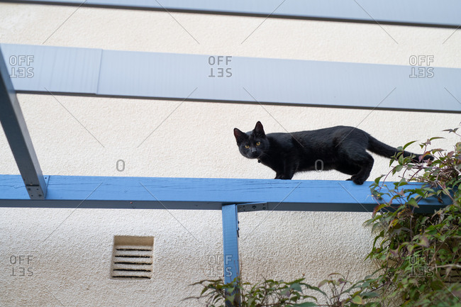 Black cat walking on beam outside of house